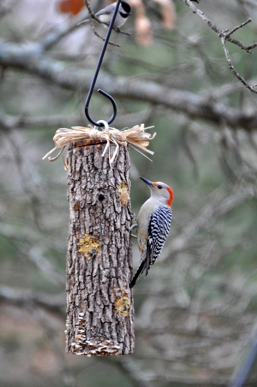 Suet log diy birdfeeders