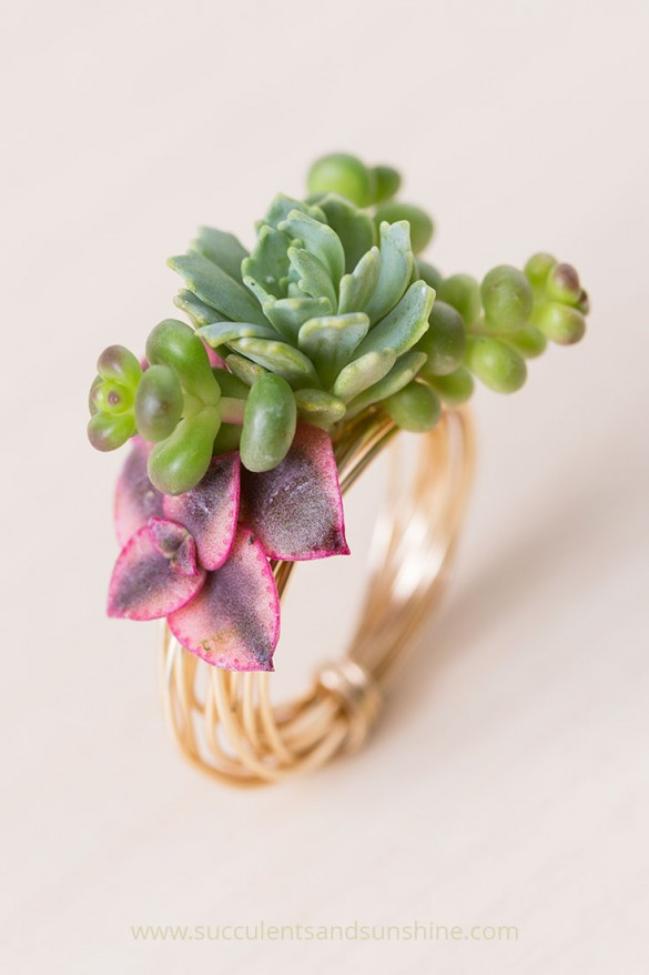 Living succulent ring diy