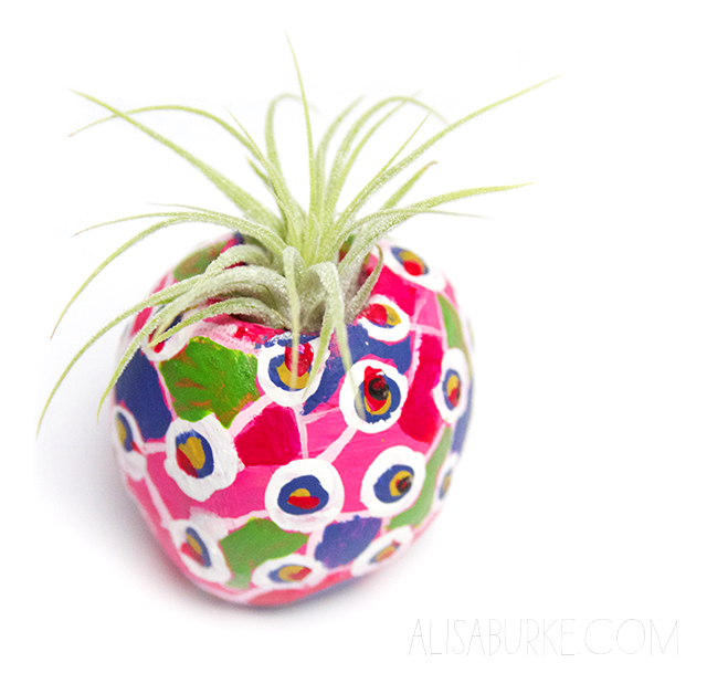 Diy air plant pots