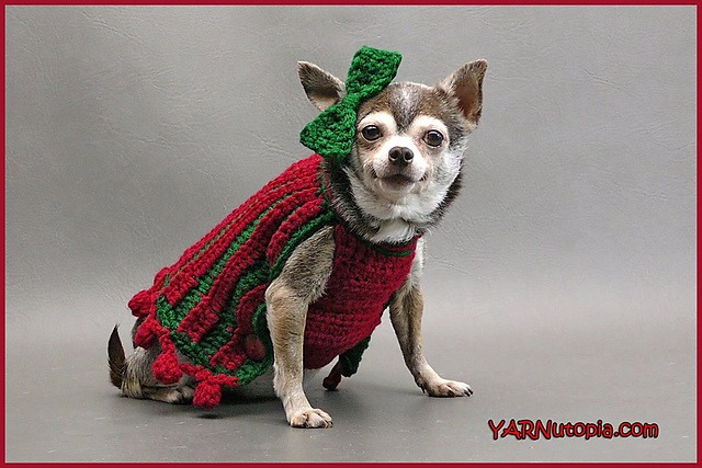 Bebe's holiday pet sweater