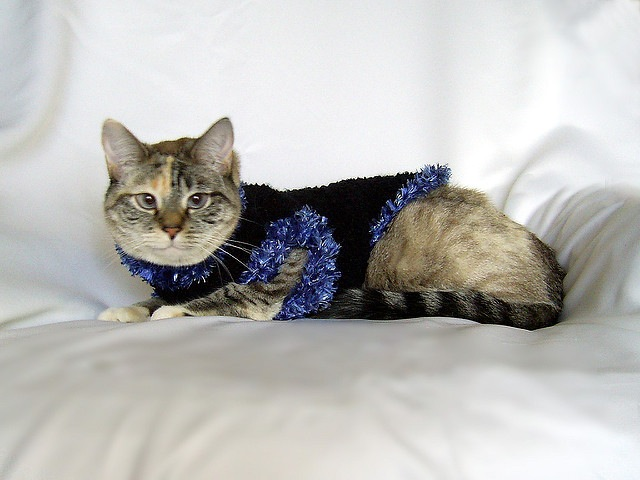 Fur trimmed pet sweater