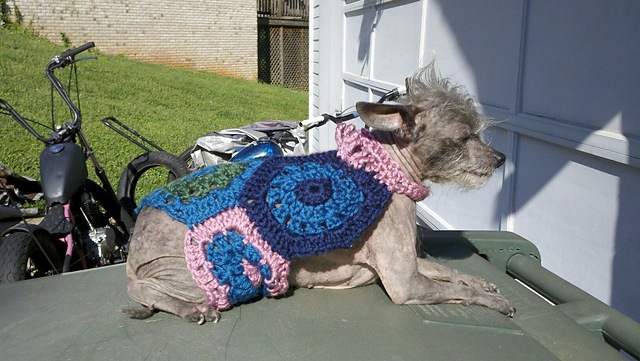Hexagon pet sweater
