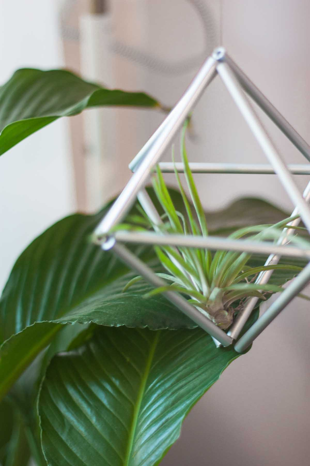Diy himmeli air plant set4