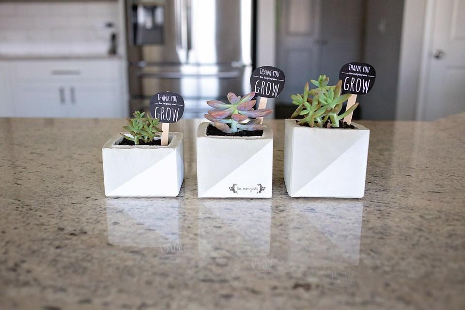 Diy cement succulent planters