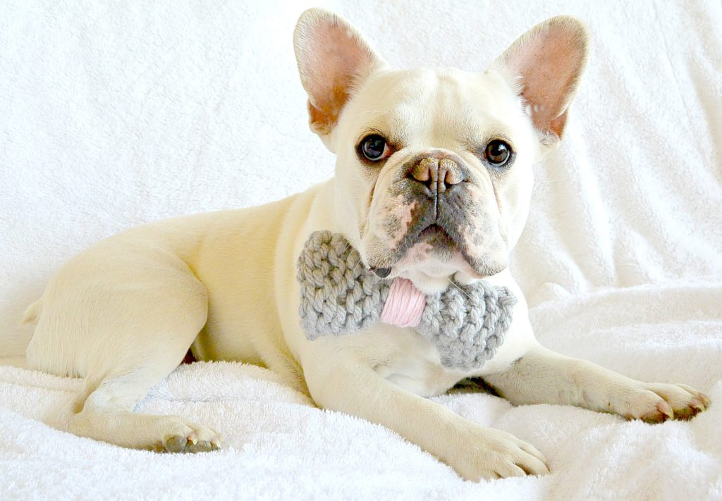 Simple knit dog bow tie