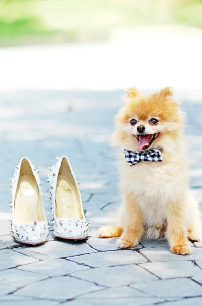 Cute doggie bow ties