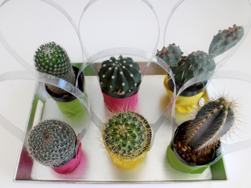 Cactus diy party favor