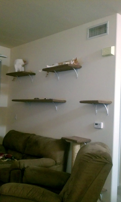 Comfy cat shelves
