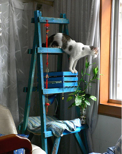 Wooden ladder cat tower
