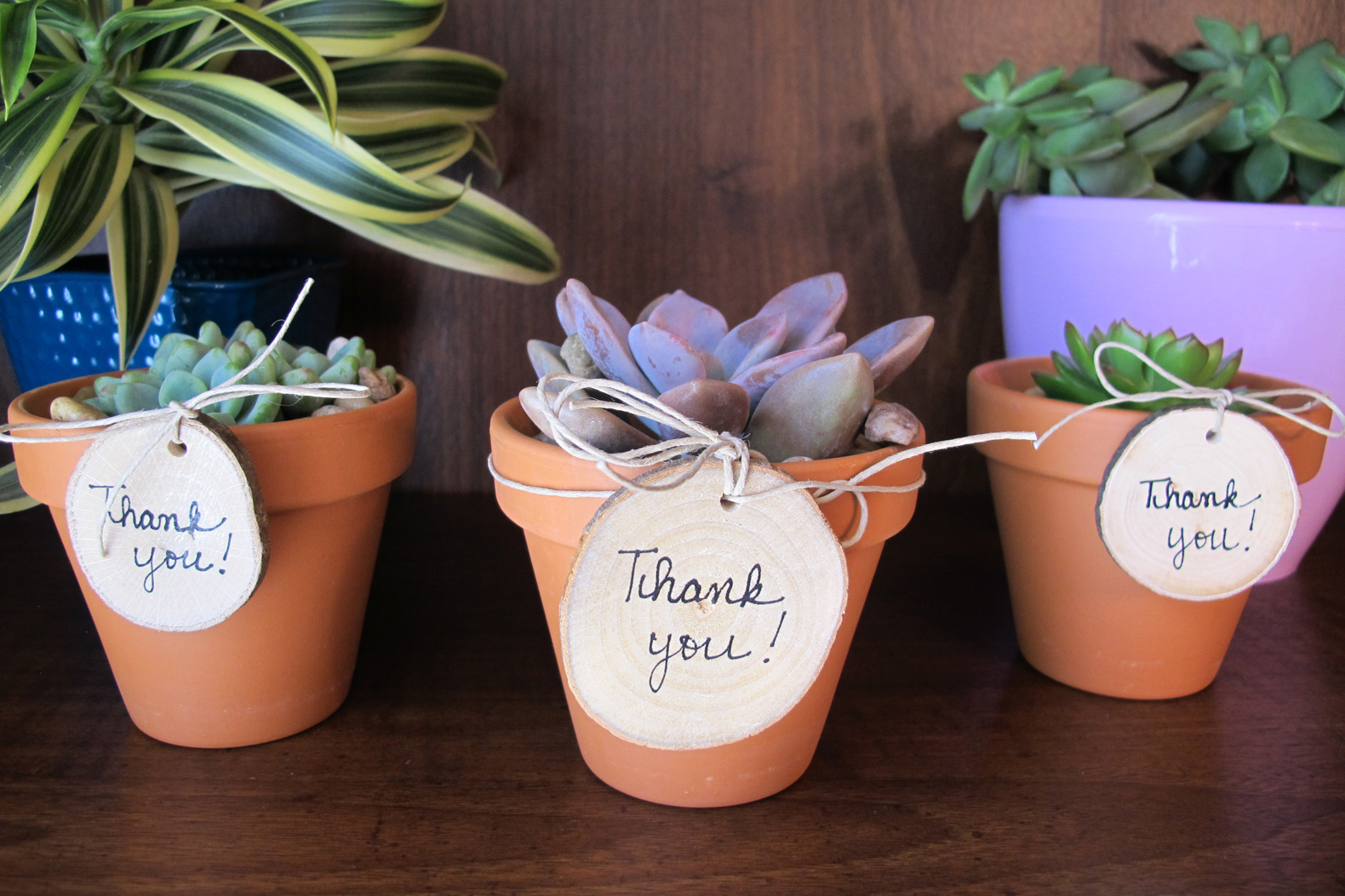Diy mini succulent pots