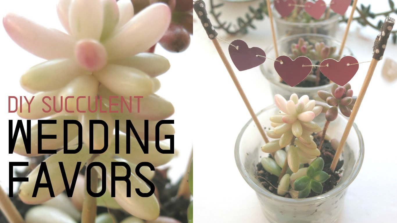 Diy succulent wedding favors
