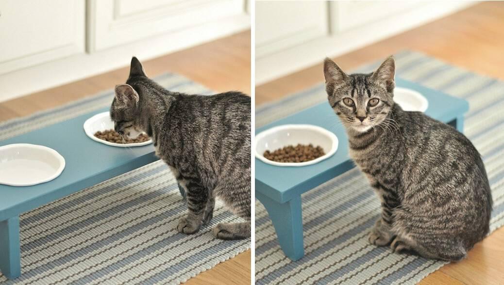 Cat feed bowls
