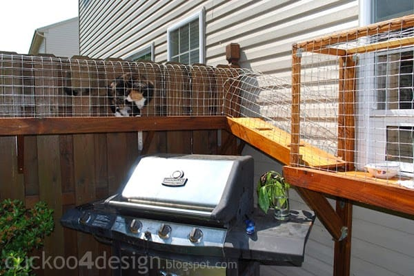 Diy outdoor cat run