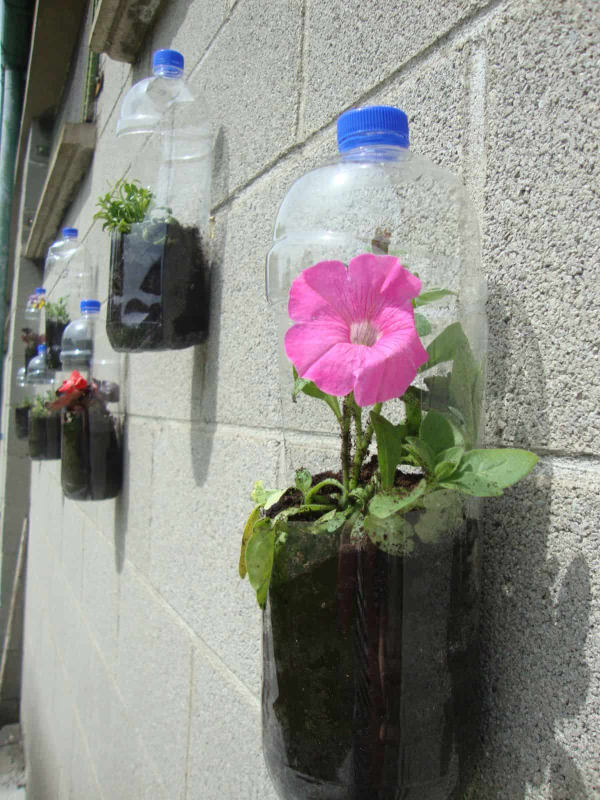 Hanging plastic bottles