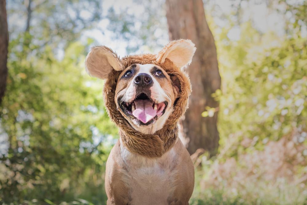 Bear dog funny dog halloween costumes