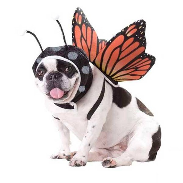 Butterfly dog cute dog halloween costumes