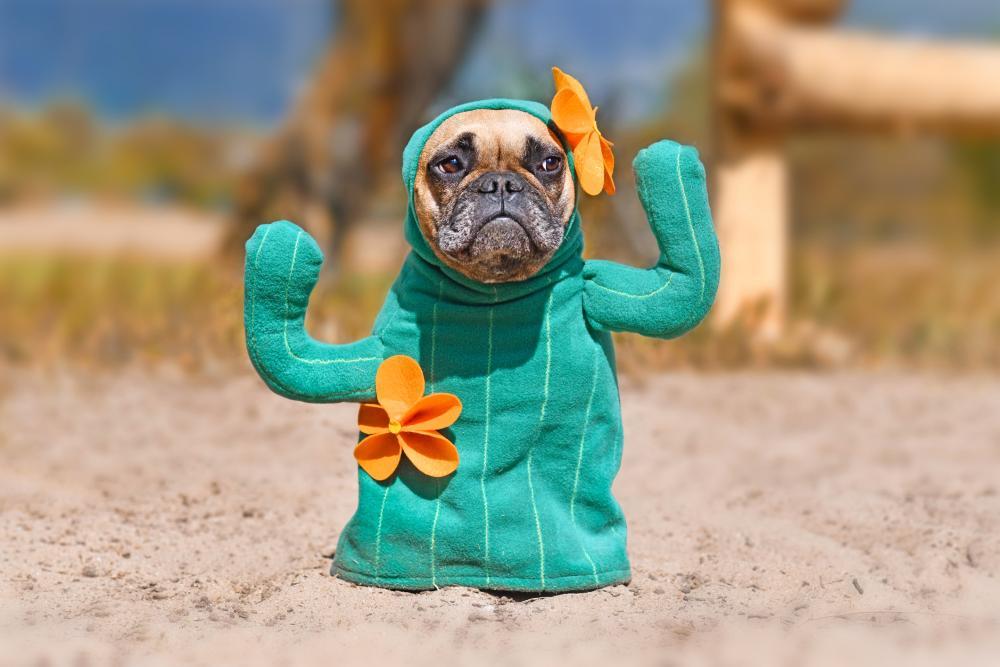 Cactus diy dog halloween costumes