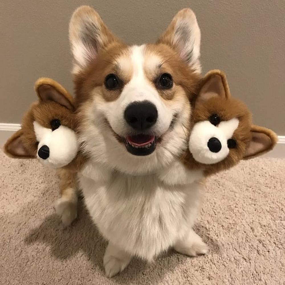 Cerberus diy dog halloween costumes