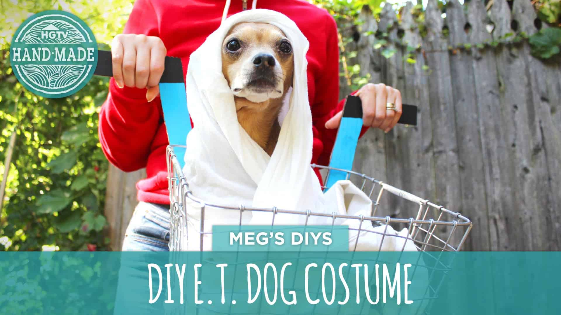 Funny diy halloween costumes for dogs doggie et solutioingenieria Choice Image