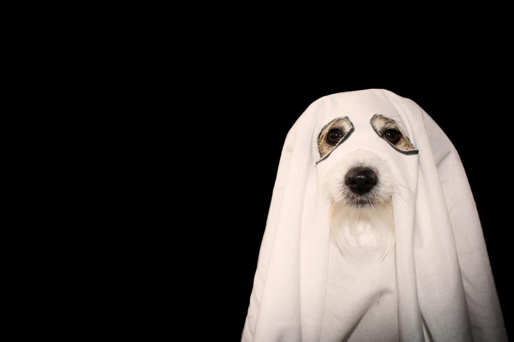 Ghost dog funny dog halloween costumes