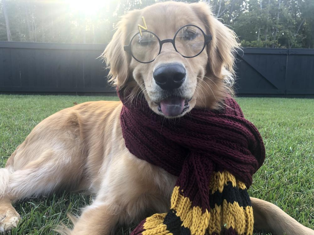 Harry potter dog large dog halloween costumes