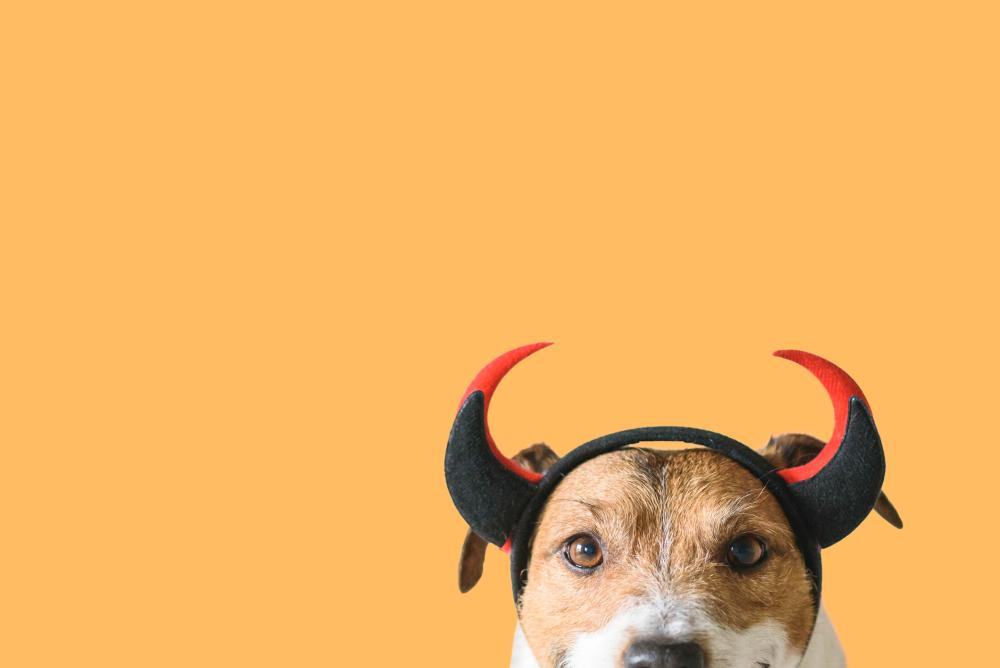 Hell hound easy dog costumes