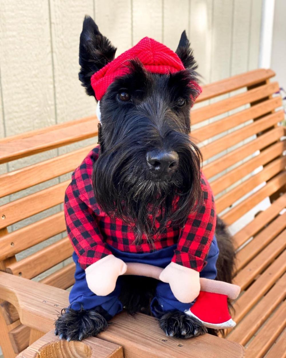 Lumberjack dog cute dog halloween costumes