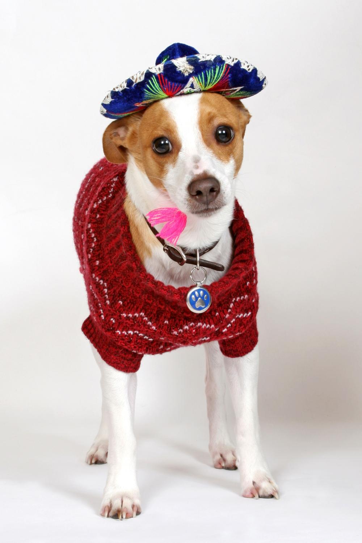 Mariachi dog homemade dog costumes