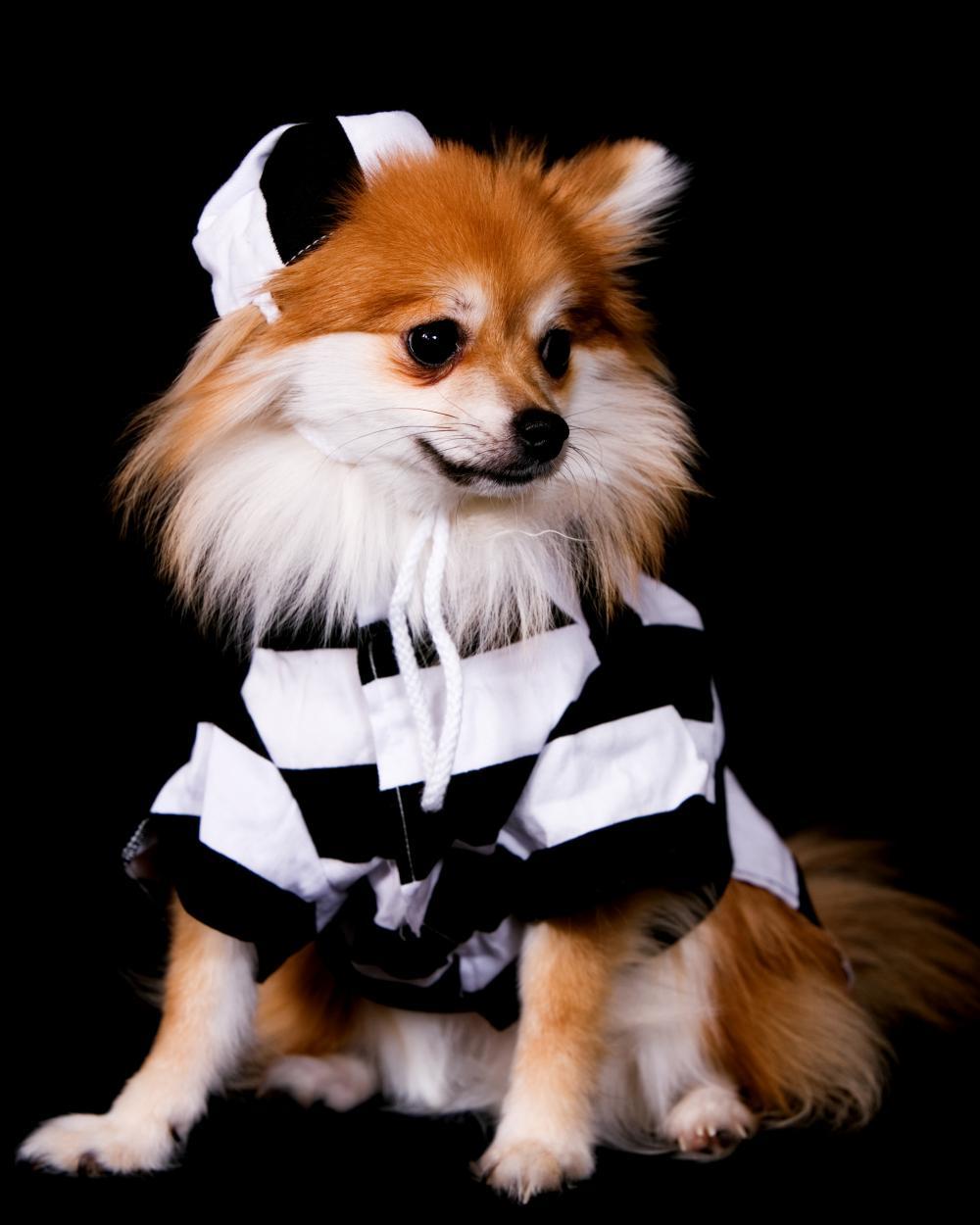 Prison break dog easy dog costumes