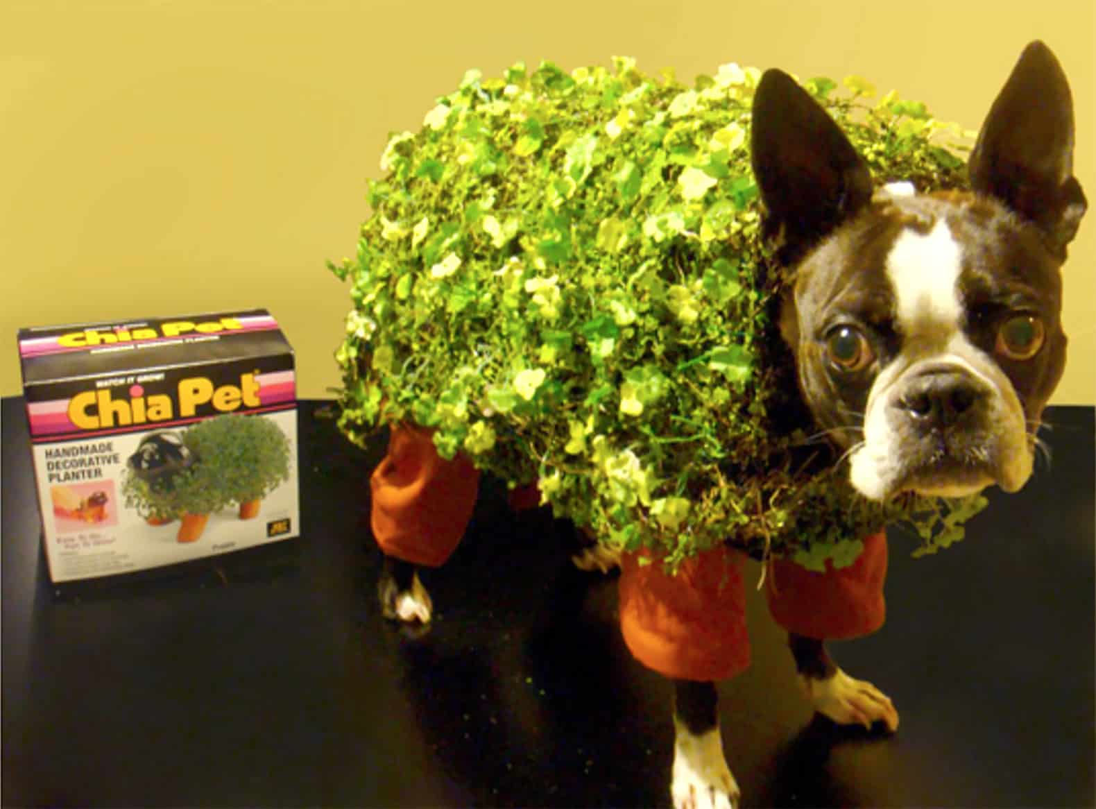 Puppy chia pet