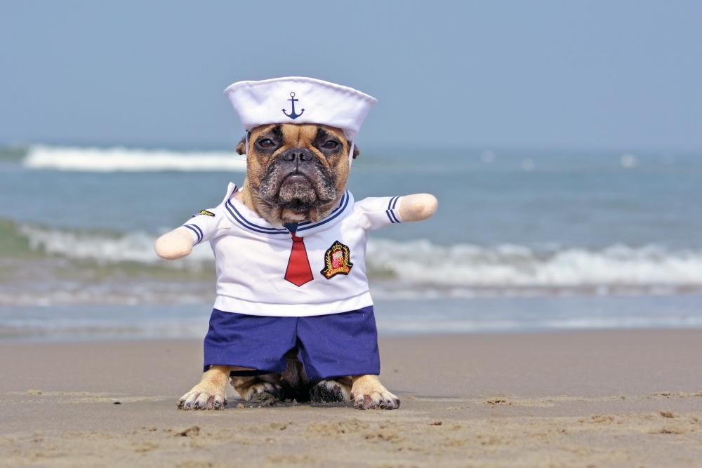 Sailor dog cute dog halloween costumes