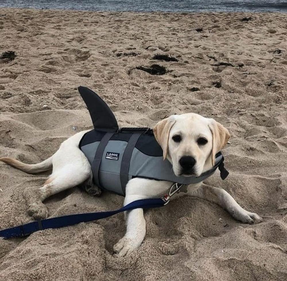 Shark dog easy dog costumes