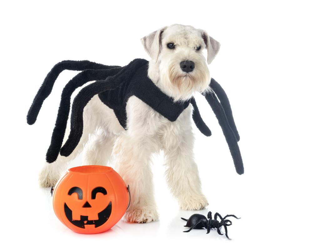 Spider dog easy dog costumes