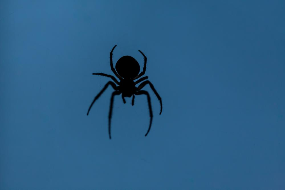Spider silhouette spider cut out