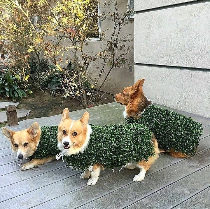 Stealthy hedge dog small dog halloween costumes