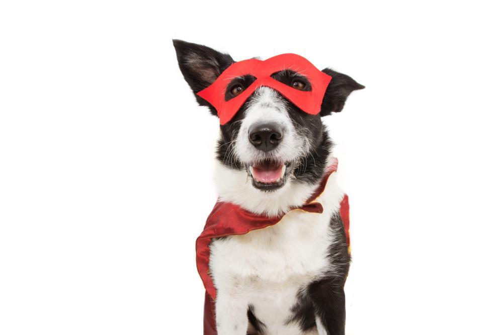 Superdog funny diy costumes