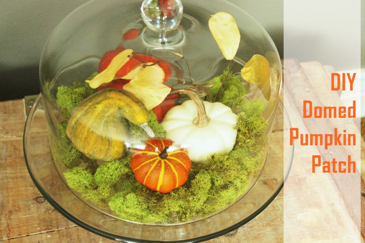 Terrarium halloween pumpkin ideas