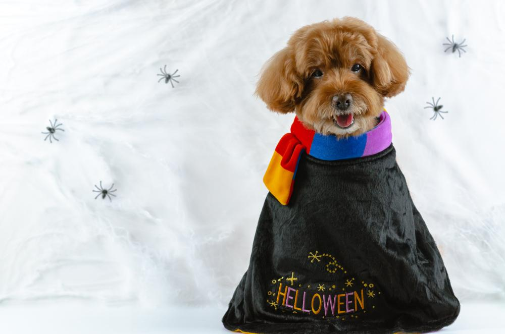 Treat bag dog easy dog costumes