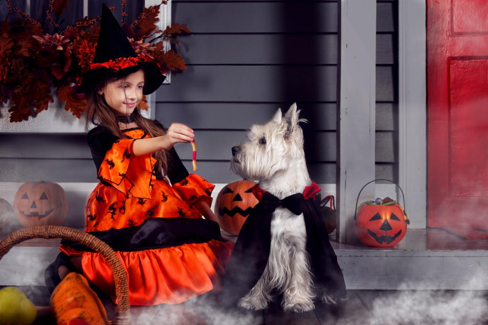 Vampire dog dog and owner halloween costumes