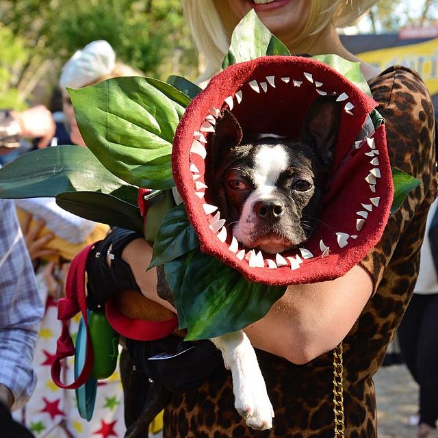 Venus flytrap dog homemade dog costumes