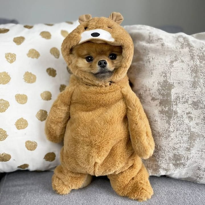 Walking teddy bear dog small dog halloween costumes
