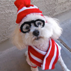 Where's waldo dog