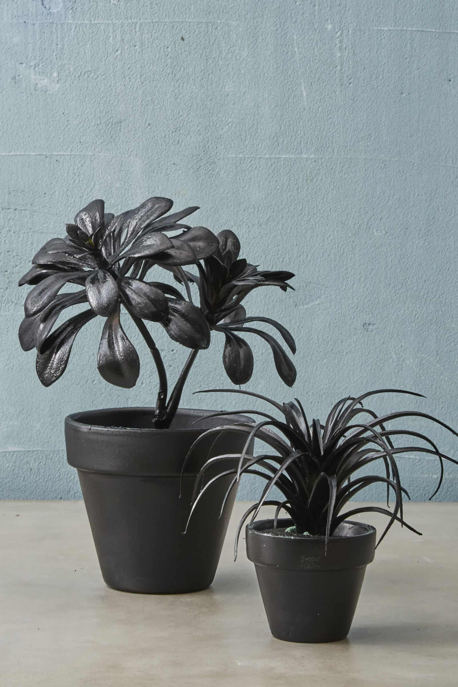 Black halloween potted plants