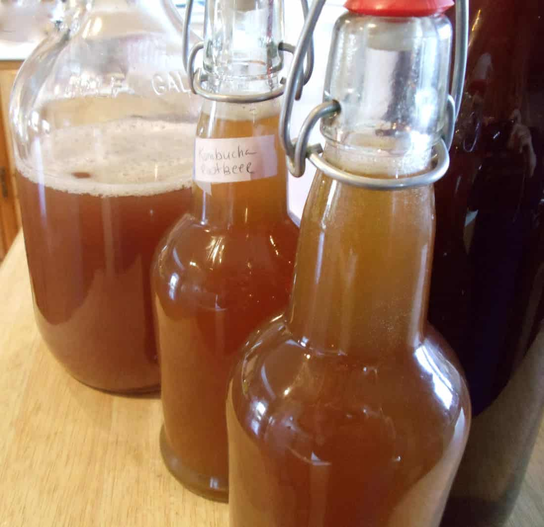 Kombucha root beer