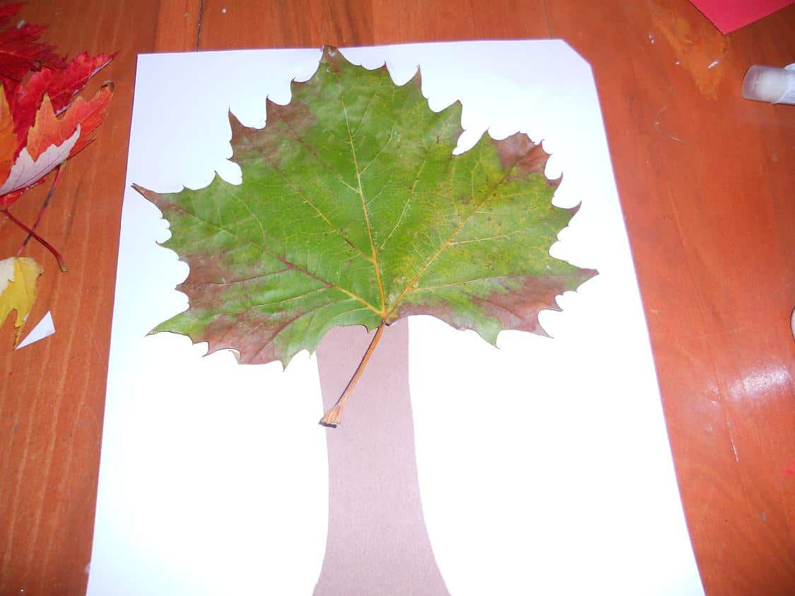 Tree craft with a real leaf top