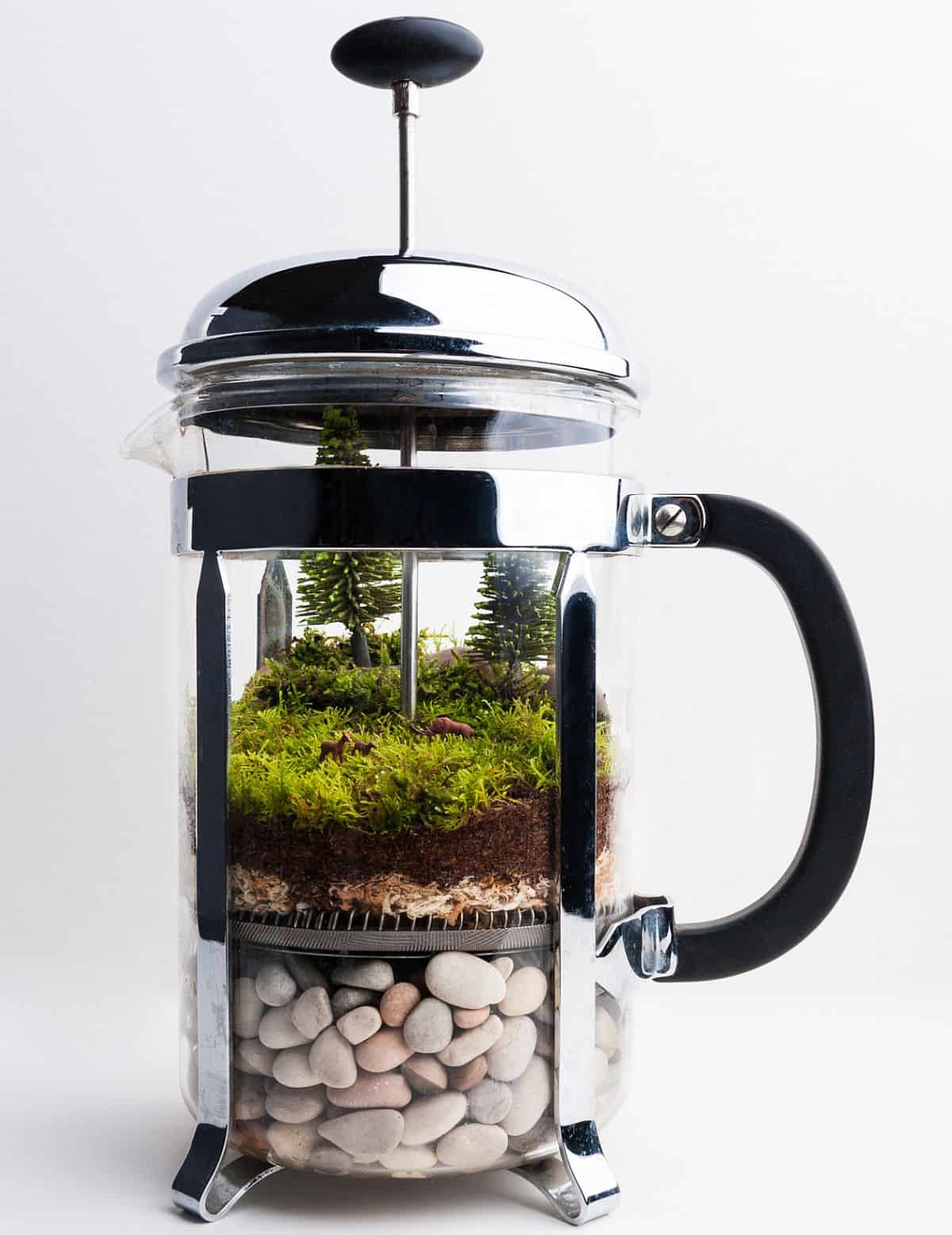 Diy french press terrarium