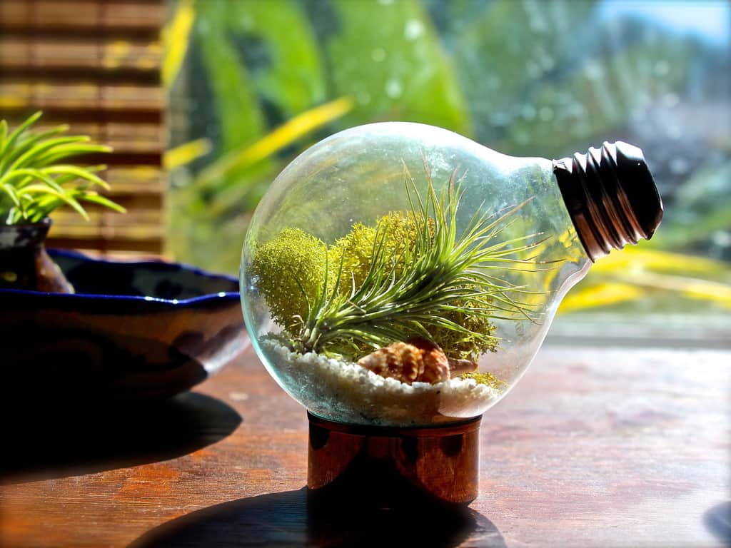 Miniature light bulb terrariums