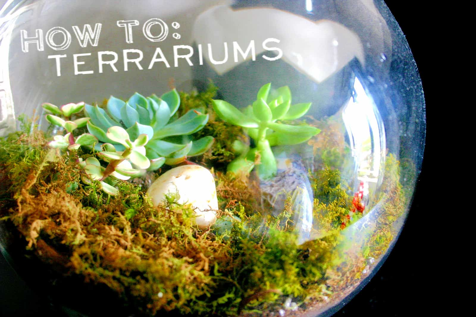 Moss and succulent terrariums
