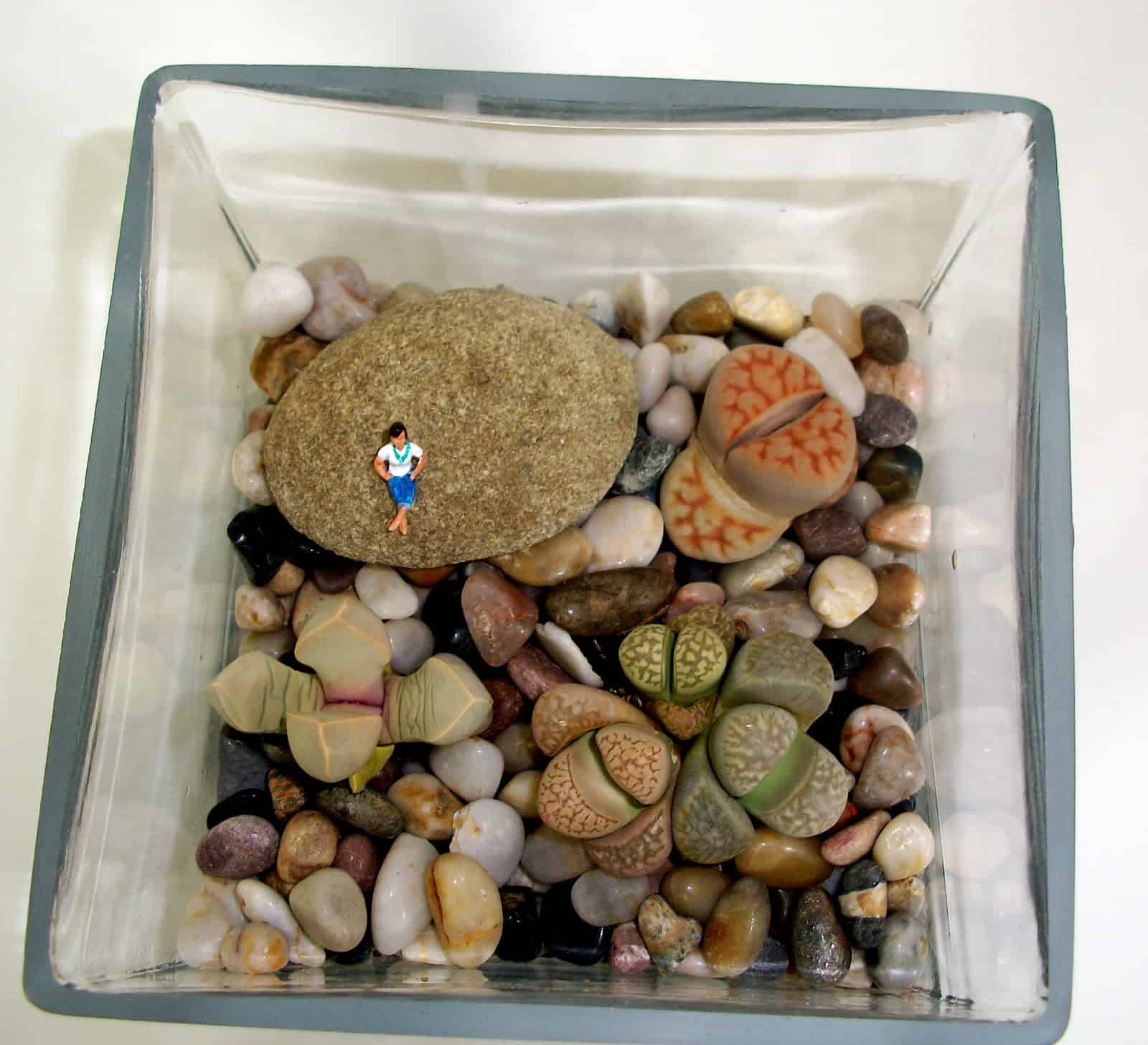 Painted rock terrarium