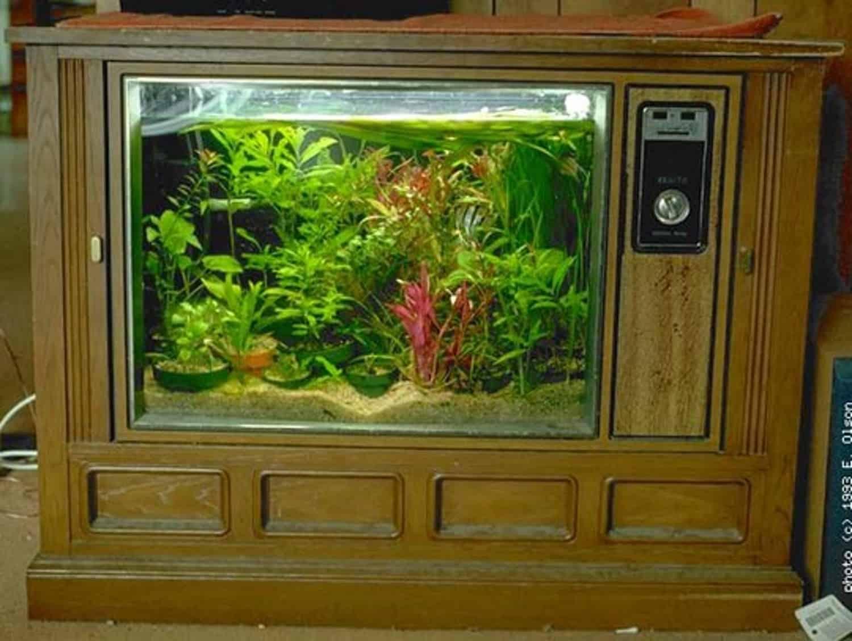 Vintage tv terrarium